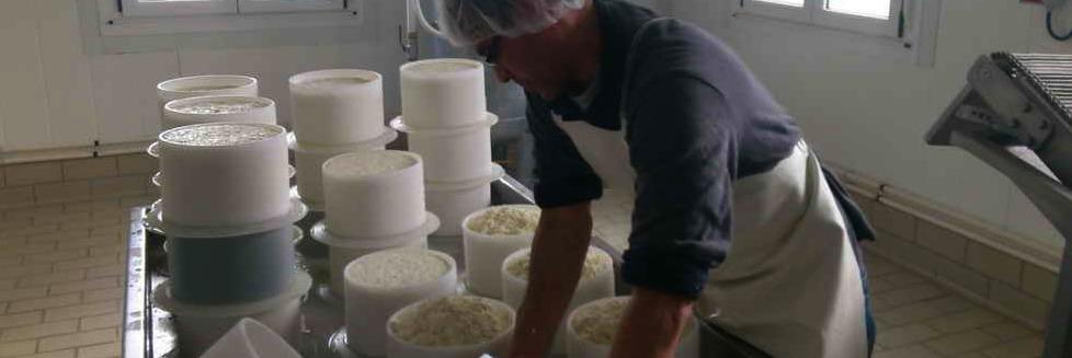 Elaboración de queso Picón Bejes Tresviso
