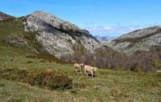 Lebeña – Collado Taruey – San Pedro – Salarzon – Cobeña – Lebeña