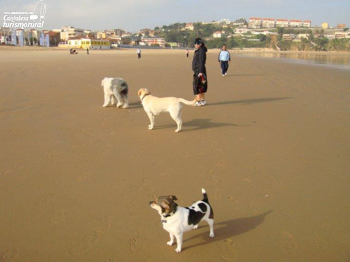 Playas De Cantabria Que Admiten Perros Playas Pet Friendly En Cantabria