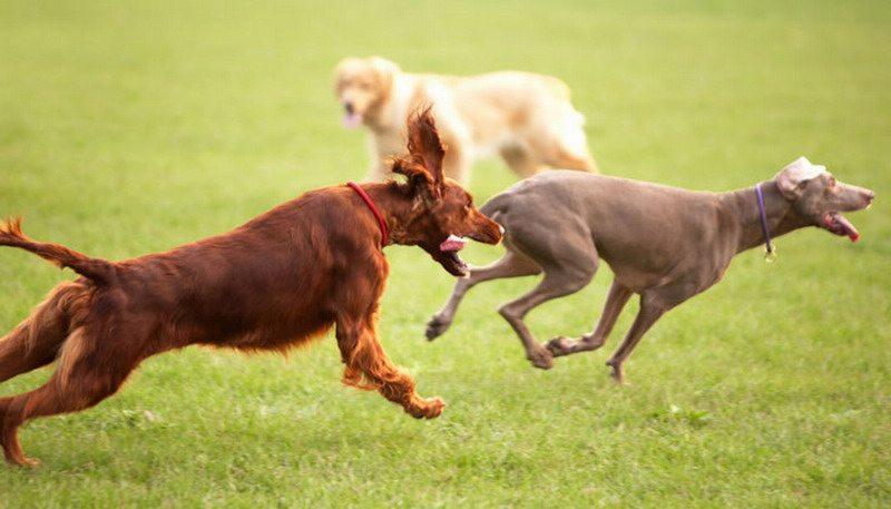 casas rurales cantabria con perros