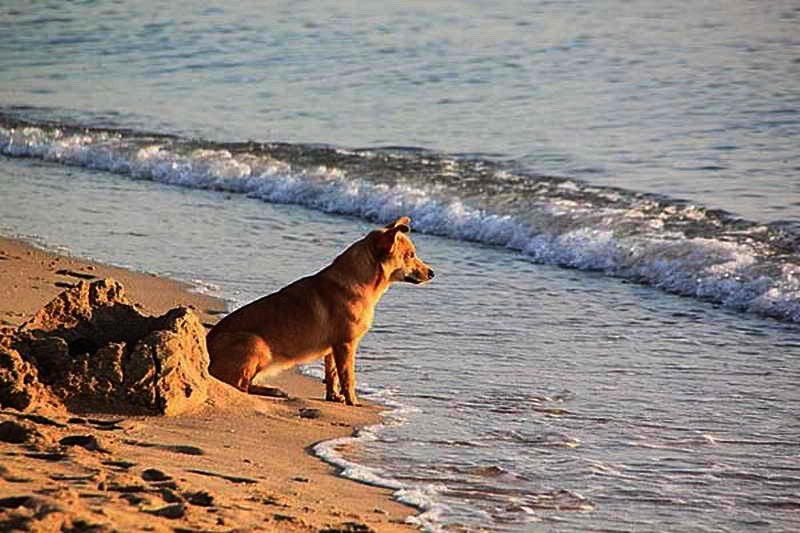 casas rurales en san vicente de la barquera que admiten perros