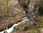 Acebal de Abiada Cantabria Cantabriarural