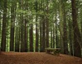 Monumento Natural de las Secuoyas del Monte Cabezon Cantabria Cantabriarural