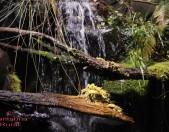 Parque Natural Saja Besaya Cantabria Cantabriarural