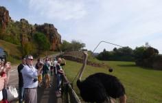 Parque de la Naturalea de Cabarceno Visitantes disfrutando de las Avestruces Cantabria Cantabriarural