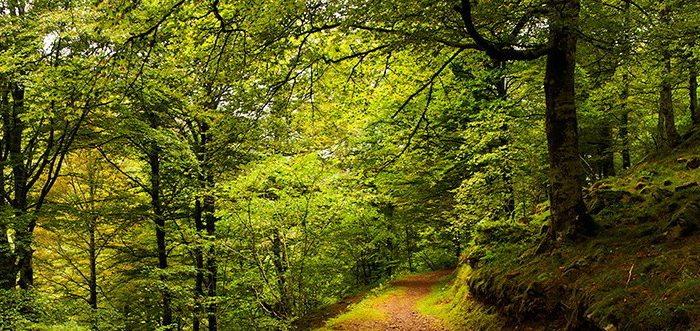 Parque Natural Saja Besaya, Parques Naturales de Cantabria.