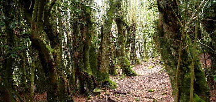 Acebal de Abiada, Bosques singulares de Cantabria