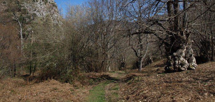 El Castañar de El Habario,Qué ver en Liébana (Cantabria) lugares de interés