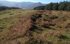 Yacimiento Arqueologico el Canton en San Felices de Buelna