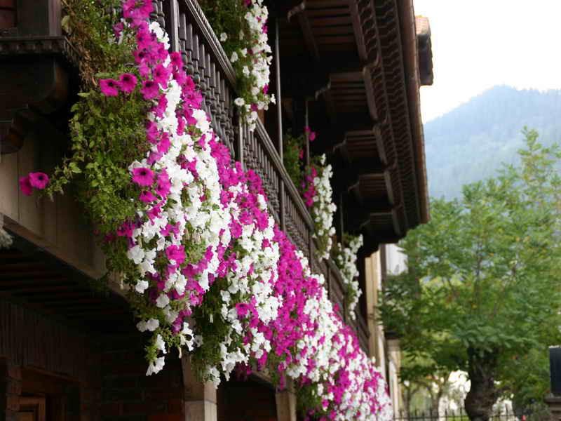 Flores en el balcón de Hosteria Peña Sagra