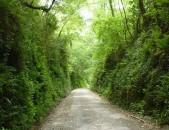 Via verde Castro Alen
